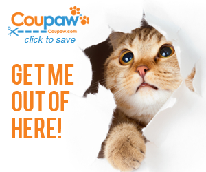 National Cat Day Discounts at FlexOffers.com