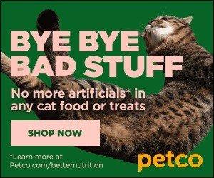National Cat Day Savings