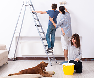 Booming Home Improvement and Pet Stores